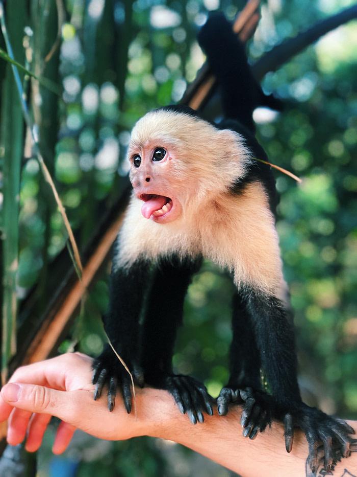 Monkey doing software development